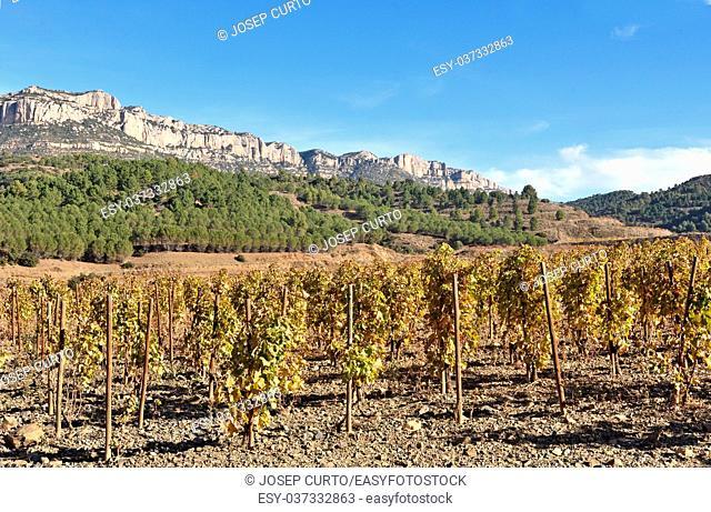 vineyards in autumn near the village of La Vilella Alta, in the background the mountain of Montsant, El Priorat, Tarragona, Spain