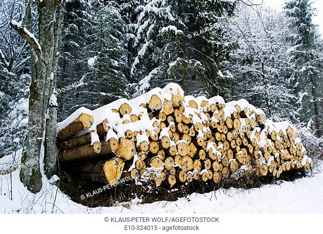 Stack of wood in snow-covered forest. Mühltal, near Munich. Germany