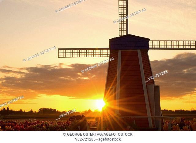 Windmill sunset, Wooden Shoe Bulb Co., Clackamas County, Oregon, USA