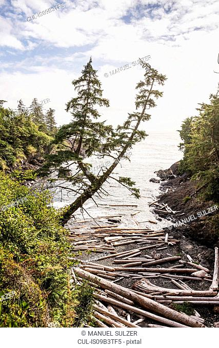 Driftwood logs scattered on beach, Wild Pacific Trail, Vancouver Island, British Columbia, Canada