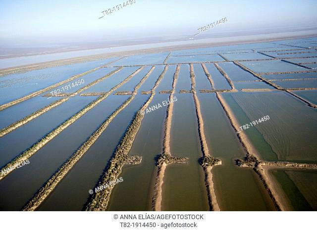Guadalquivir River aerial view with cultivated fields, Cadiz, Doñana Natural Park, Spain, Europe