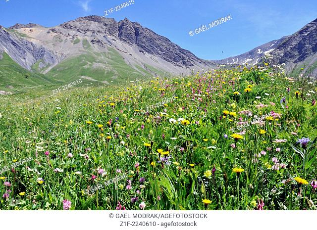Alpine french moutains in summer, France