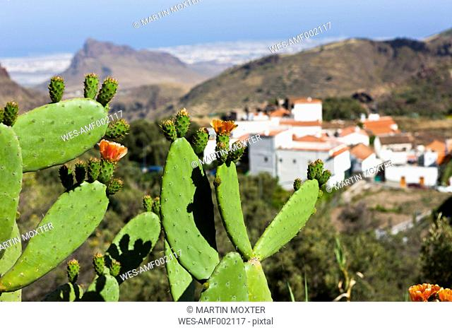 Spain, Canary Islands, Gran Canaria, Cactus and mountain village Temisas