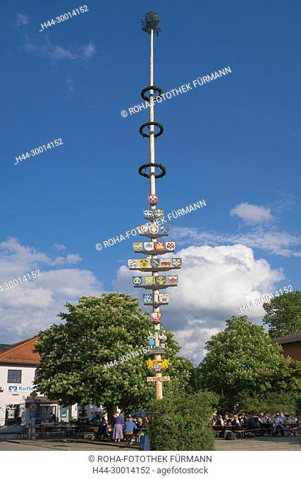 Maibaumaufstellen in Teisendorf mit den Maibaumdieben aus Thundorf-Straß