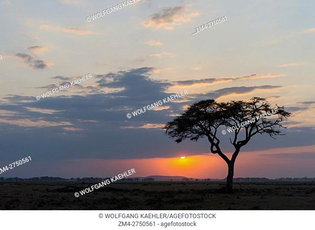 Sunset with tree in foreground in Amboseli National Park, Kenya