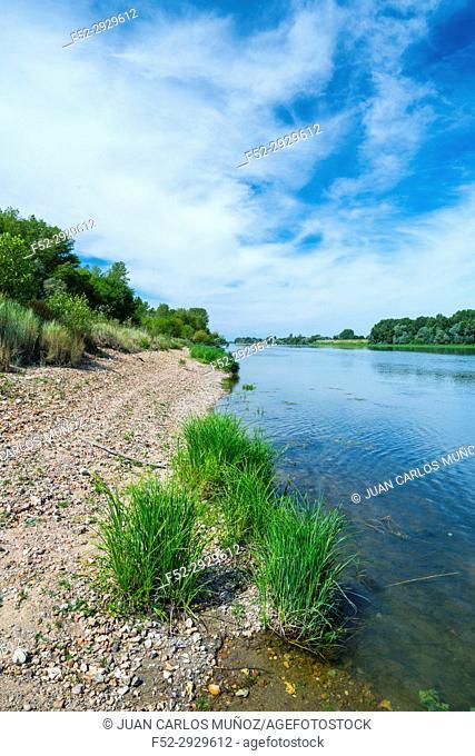 Loire River, Chaumond-sur-Loire, Loir-et-Cher Department, The Loire Valley, France, Europe