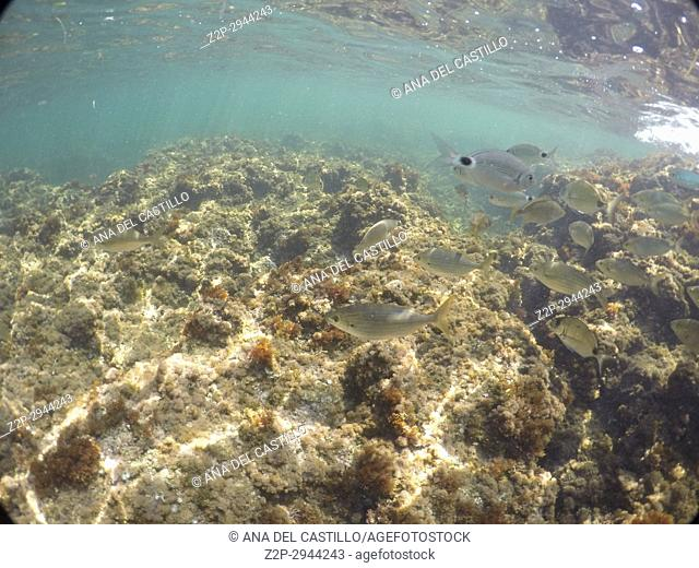 Underwater image in Denia San Antonio Cape nature reserve Alicante Spain