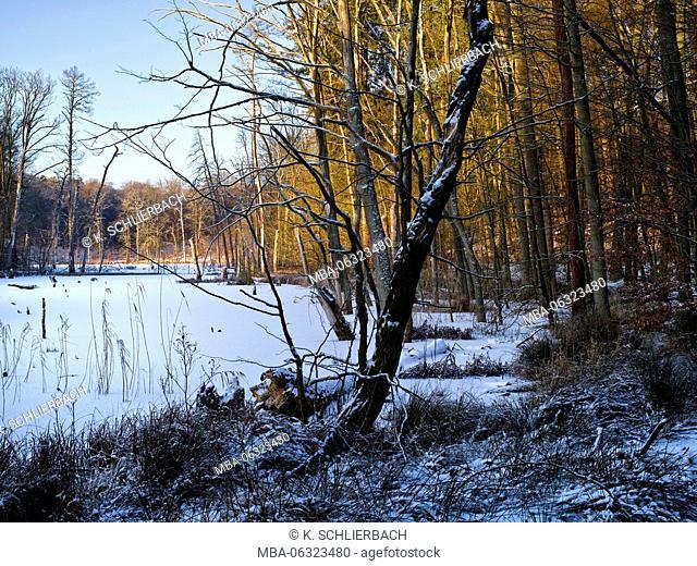 Germany, Mecklenburg-Western Pomerania, Mueritz National Park, beech forest Serrahn, UNESCO World Heritage - natural site of European beech forests