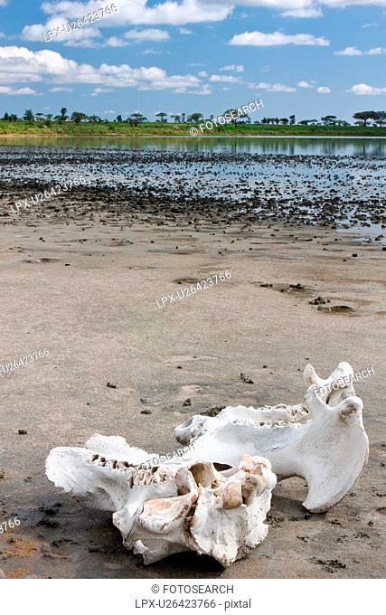 Ngorogoro Conservation Area, Central, Ndutu, National Park, Lake Masek, Serengeti, Africa