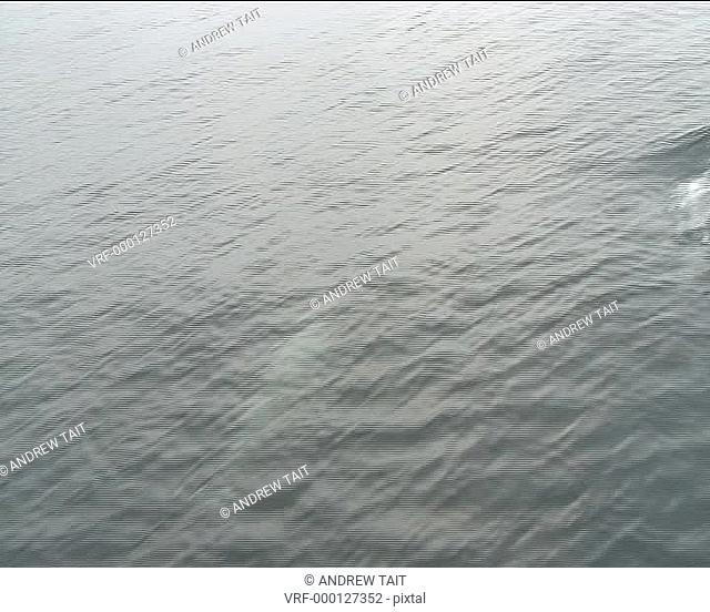 medium shot Bottlenose dolphins weaving in front of boat, adult does tail slap. Hebrides, Scotland