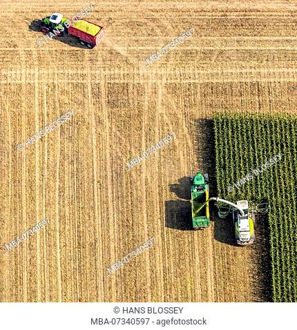 Corn harvest with Claas mower and tractor, corn field, harvest, agriculture, Dortmund, Ruhr area, North Rhine-Westphalia, Germany