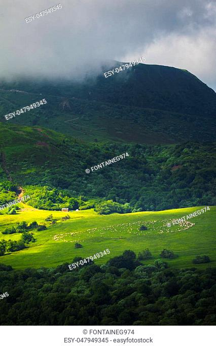 Meadow with sheeps in grass, Auvergne landscape and Puy de Dome, France