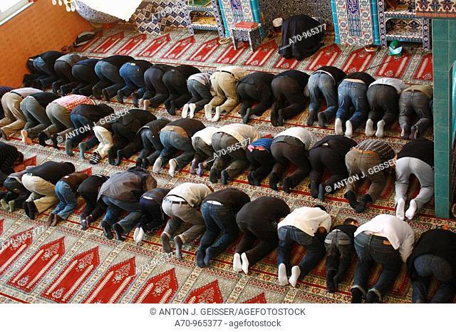 Glaeubige Moslem knieen auf dem Teppichboden waehrend eines Gebets 8 NOV, 2009 NUR REDAKTIONELL !