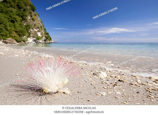 Indonesia, Lesser Sunda Islands, Alor Island, Batu Putih beach (the white stone) flower on the sand