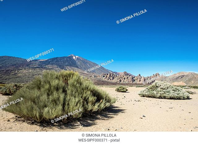 Spain, Tenerife, landscape and vegetation in El Teide region