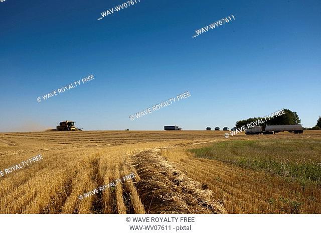 Combines and trucks in field, Redvers, Saskatchewan, Canada