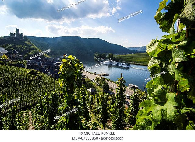 Cruise ship on the Moselle and a Vineyard in Beilstein, Moselle valley, Rhineland-Palatinate, Germany