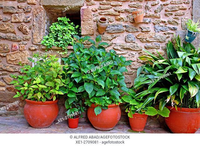 Flowerpots, Monells, Baix Emporda, Catalonia, Spain