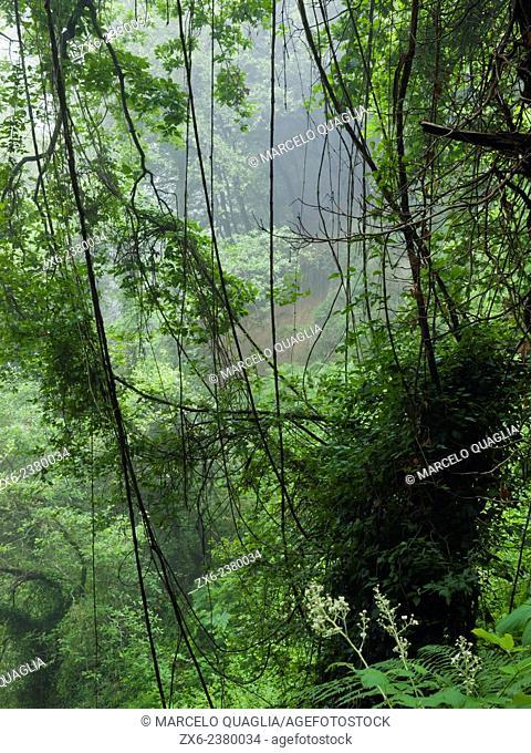 Flora diversity forest. Montseny Natural Park. Barcelona province, Catalonia, Spain