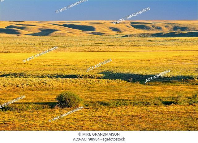 Canadian priaire grasslands (West Block) Grasslands National Park Saskatchewan Canada