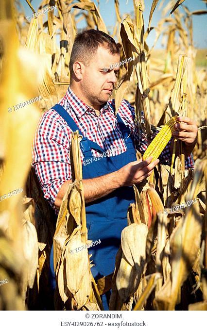 Closeup of farmer at corn harvest