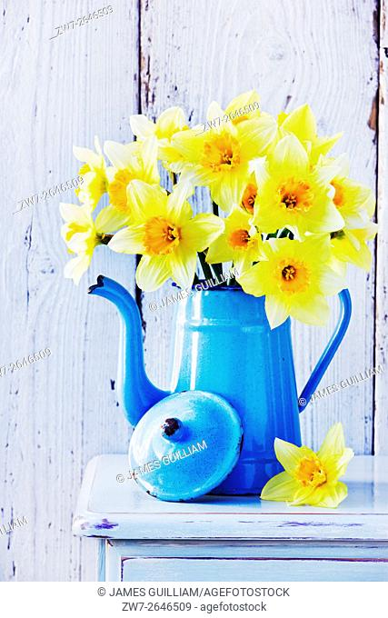 Narcissus daffodils in vintage coffee pot