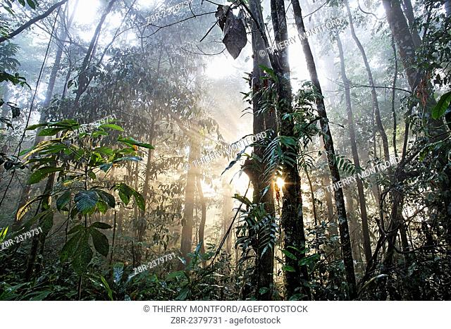 Forest of the Kaw mountain. French Guiana