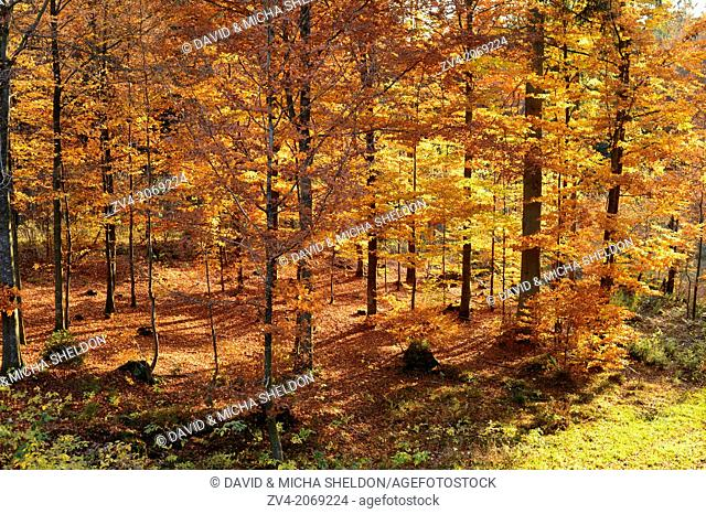 Landscape of forest in autumn in the bavarian forest