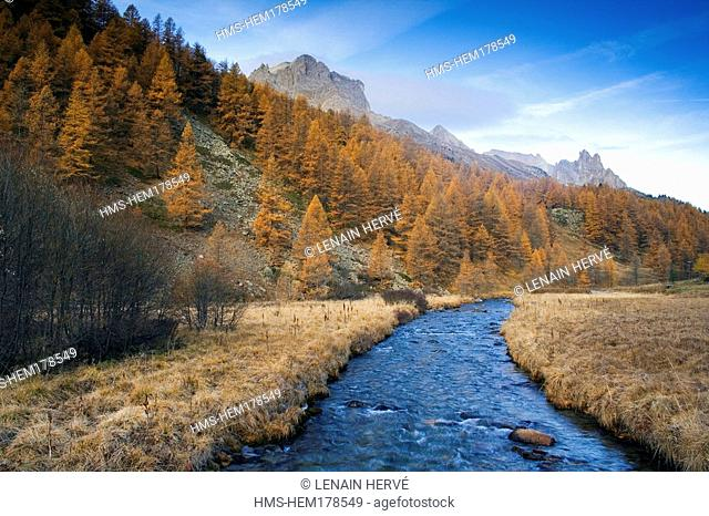 France, Hautes Alpes, La Claree Valley, Nevache, forest of larches in Autumn and La Claree