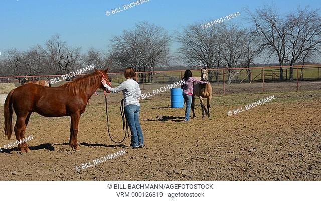 Dallas Texas Tate Ranch young cowgirls training 2 year old horses to get them ready for first saddle on them for training at ranch  2