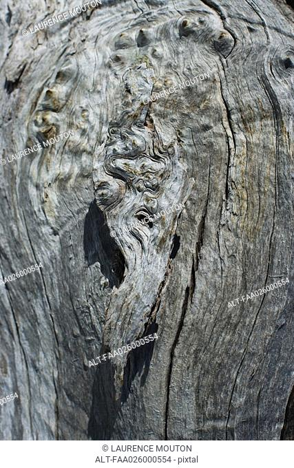 Knot in tree trunk, extreme close-up