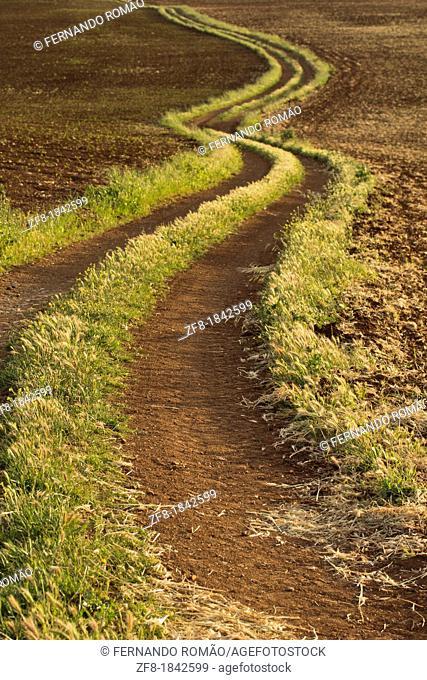 Rural road at Serpa region, Portugal