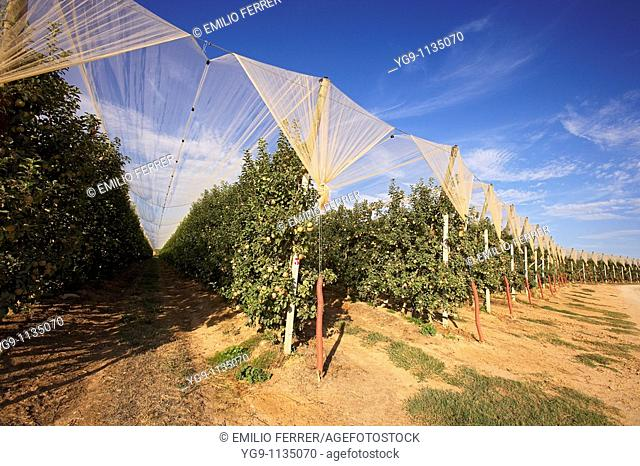 Apple protection against hailstorm in LLEIDA  Spain