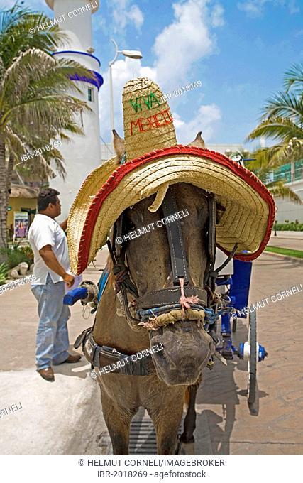 Carriage horse wearing a sombrero, Cozumel, Mexico, Caribbean