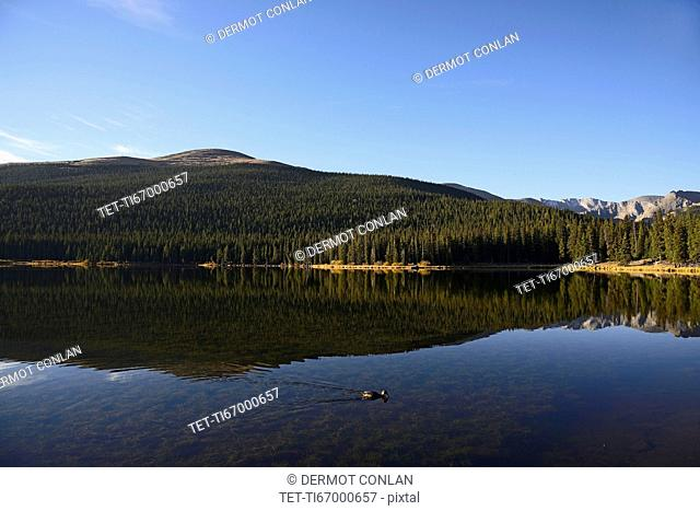 USA, Colorado, Mount Evans and forest reflecting in Echo Lake