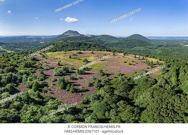 France, Puy de Dome, the Regional Natural Park of the Volcanoes of Auvergne, Chaine des Puys, Orcines, the summit of the Grand Sarcoui volcano covered with...