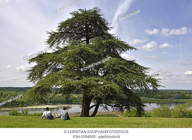 parc historique du Chateau, Domaine de Chaumont-sur-Loire, departement Loir-et-Cher, region Centre-Val de Loire, France, Europe/historic grounds