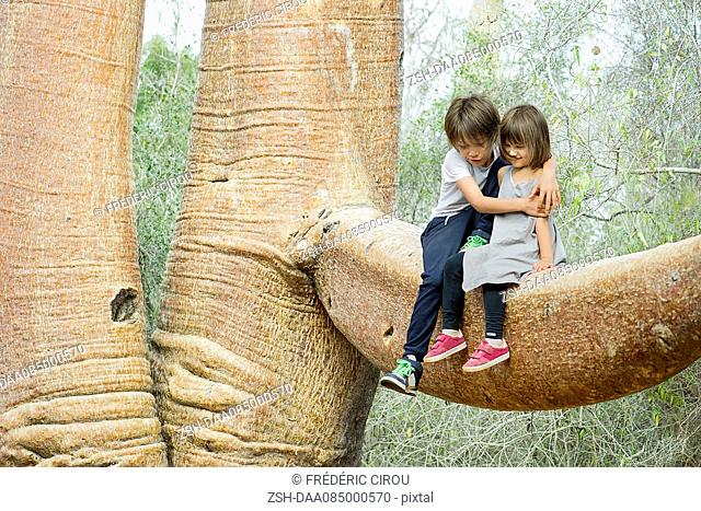 Children sitting together on baobab tree branch
