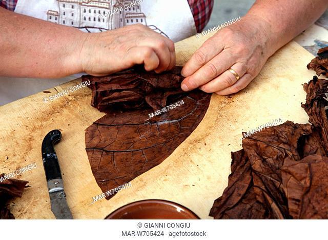 realizzazione artigianale di sigari toscani, anghiari, toscana, italia