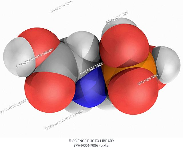 Glyphosate, molecular model. Broad-spectrum-herbicide used to kill weeds. Atoms are represented as spheres and are colour-coded: carbon grey, hydrogen white