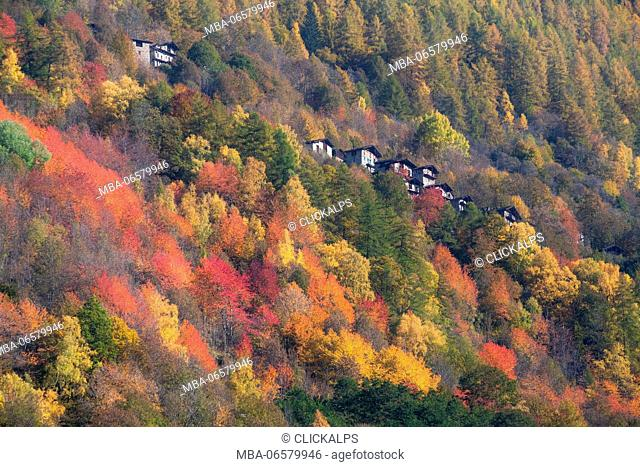 Autumn colors in Malenco valley, Lombardy, province od Sondrio, italy