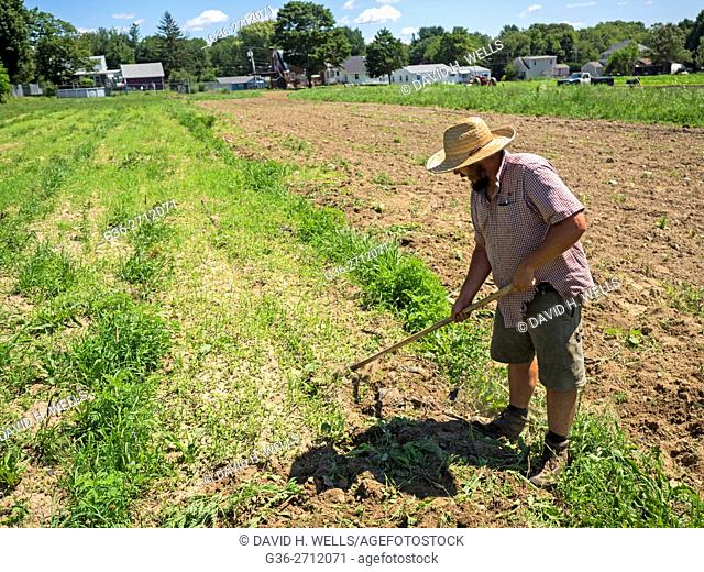 Small-scale farmer hoeing soil on an artisanal organic farm in Johnston, Rhode Island, USA