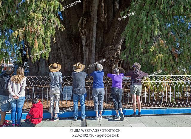 Santa María del Tule, Oaxaca, Mexico - Tourists study El Árbol del Tule, or the Tree of Tule, a Montezuma cypress which has the largest circumference of any...