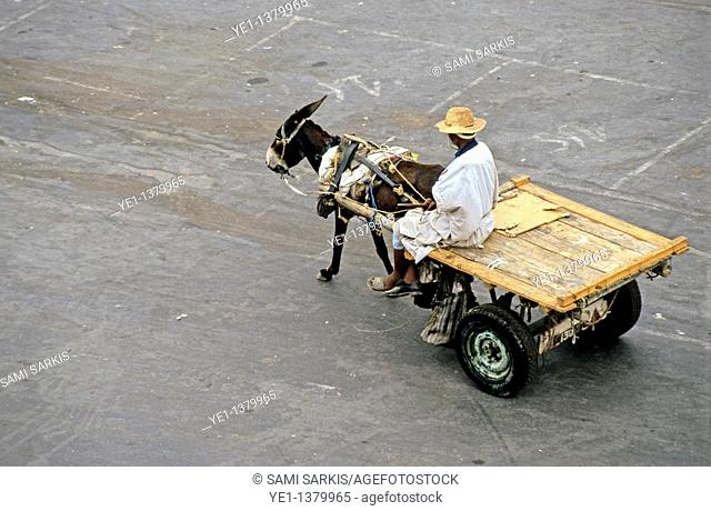 Man riding his donkey and a carriage in the early morning, Djemaa el Fna, Marrakesh, Morocco