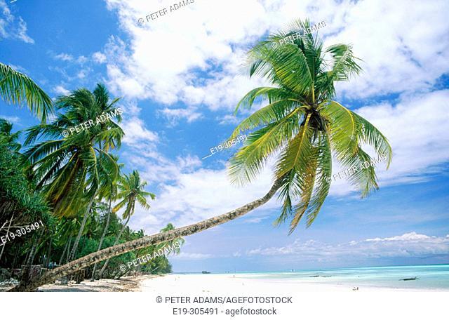 Beach with coconuts in Zanzibar's east coast. Tanzania