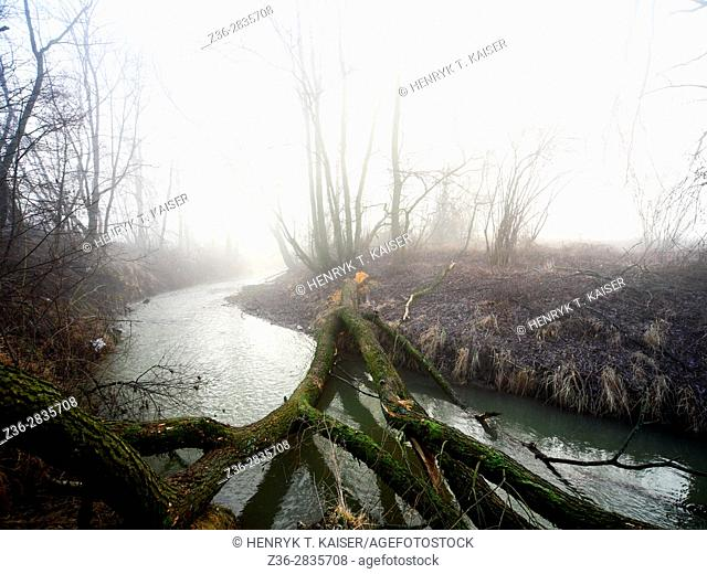 Stream with twisted branches and trees in Lesser Poland near Krakow