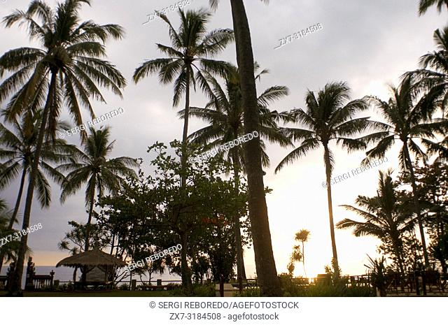 Palm trees by the sea at the Windy Cottages hotel in Senggigi. Lombok Indonesia