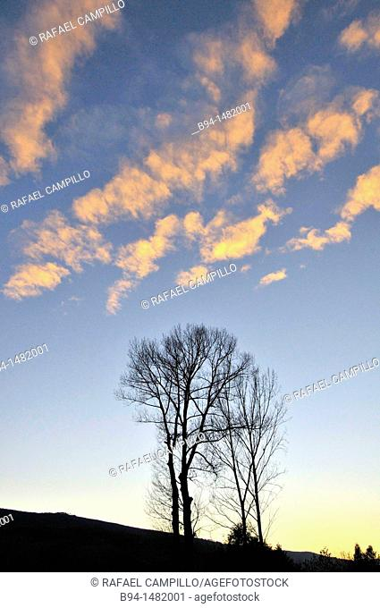 Trees in winter and clouds. Osseja, Pyrenees-Orientales, Languedoc-Roussillon, France