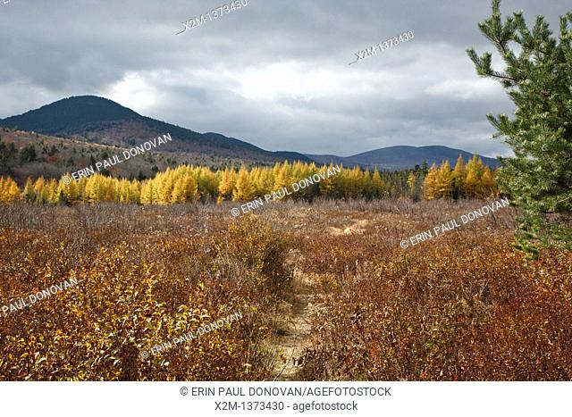 Downes – Oliverian Brook Ski Trail  This trail follows the old Swift River Railroad bed, which was an logging railroad in operation from 1906 - 1916  This...