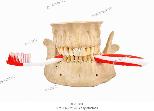 human jaw and tooth brush on a white background